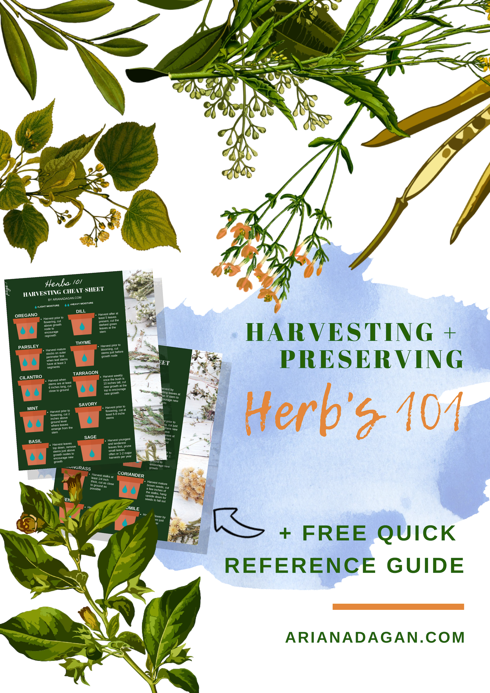 Herbs 101: Harvesting and Preserving + FREE Quick Reference Printable!