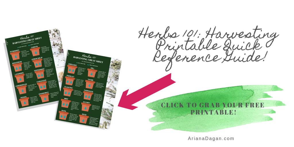 Herbs 101 Harvesting Cheat Sheet Printable by Ariana Dagan